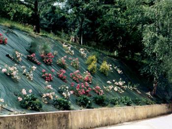 Agius Paysagiste Paysagiste Professionnel En Entretien Jardin Et D Broussaillage Dans Le 65